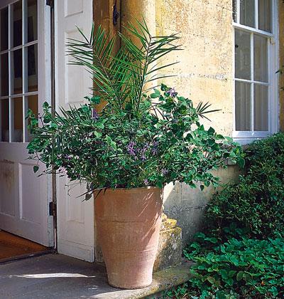 Trồng hoa tô điểm cho hiên nhà | ảnh 2