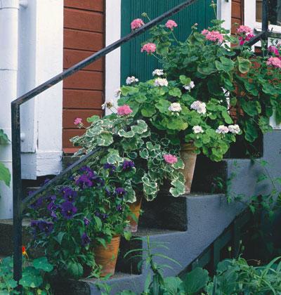 Trồng hoa tô điểm cho hiên nhà | ảnh 3