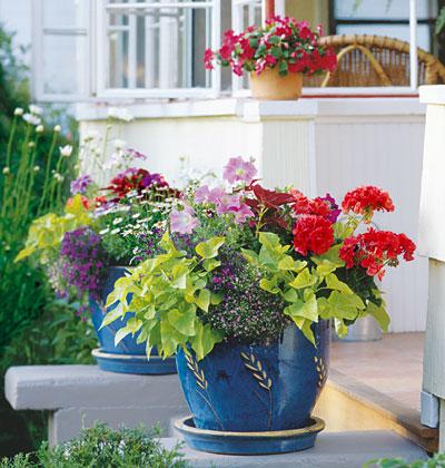 Trồng hoa tô điểm cho hiên nhà | ảnh 4
