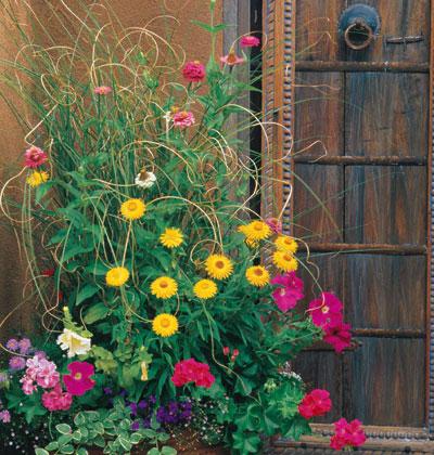 Trồng hoa tô điểm cho hiên nhà | ảnh 6