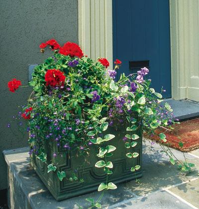 Trồng hoa tô điểm cho hiên nhà | ảnh 7