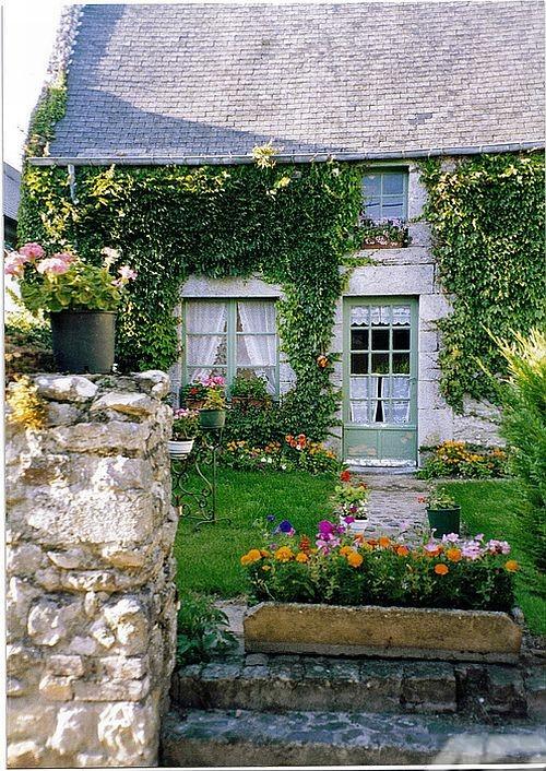 Phủ xanh cho patio | ảnh 2
