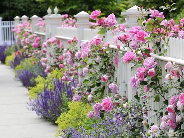 Lối vào nhà rực rỡ sắc hoa | ảnh 6
