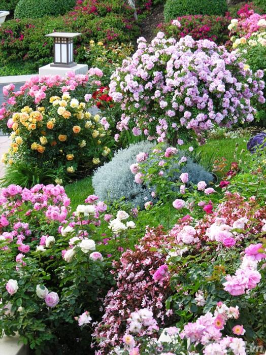 Lối vào nhà rực rỡ sắc hoa | ảnh 7