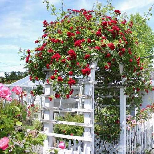 Những mẫu cổng đẹp cho biệt thự nhà vườn | ảnh 5