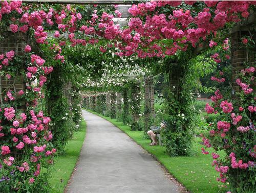 Nhà vườn hiện đại tràn ngập không gian xanh | ảnh 7