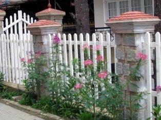 Tạo sức sống cho tường rào | ảnh 1