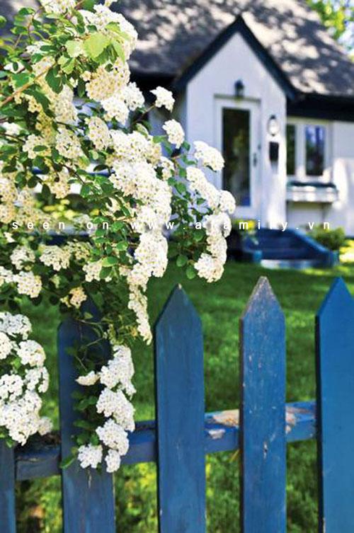 Hàng rào đẹp cho nhà ống
