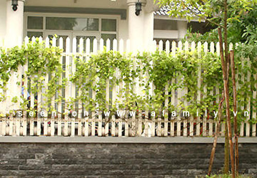 Hàng rào đẹp cho nhà ống | ảnh 7