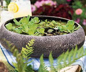 Trang trí cho khu vườn bằng những chậu nước nhỏ | ảnh 1