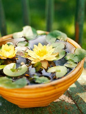Trang trí cho khu vườn bằng những chậu nước nhỏ | ảnh 3
