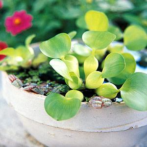 Trang trí cho khu vườn bằng những chậu nước nhỏ | ảnh 4