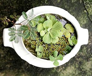 Trang trí cho khu vườn bằng những chậu nước nhỏ | ảnh 5