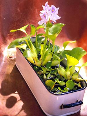 Trang trí cho khu vườn bằng những chậu nước nhỏ | ảnh 7