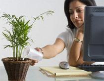 Đem cây xanh vào trong văn phòng | ảnh 1