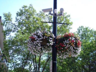 Làm duyên cho ngoại thất bằng giỏ hoa treo | ảnh 4