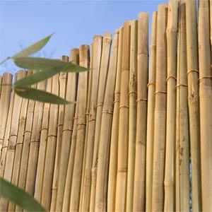 Giản dị và thanh bình với hàng rào tre | ảnh 2