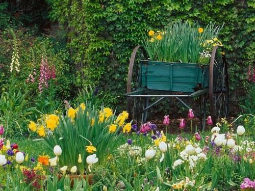 Những màu sắc rực rỡ cho khu vườn | ảnh 5