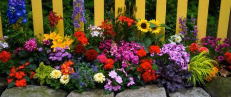 Những màu sắc rực rỡ cho khu vườn | ảnh 6