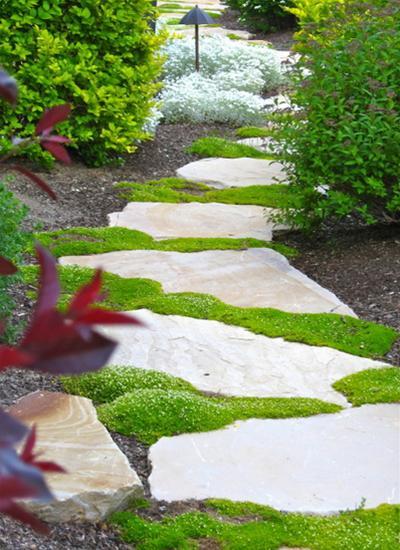 Lối đi tràn ngập hoa cỏ | ảnh 1