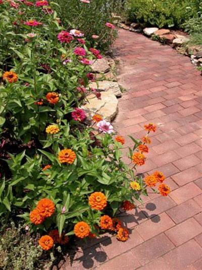 Lối đi tràn ngập hoa cỏ | ảnh 2