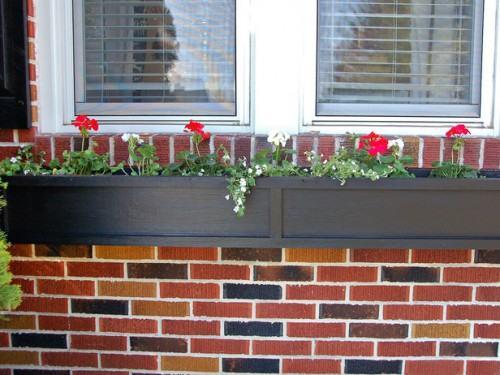 Vườn hoa cực xinh bên cửa sổ | ảnh 11