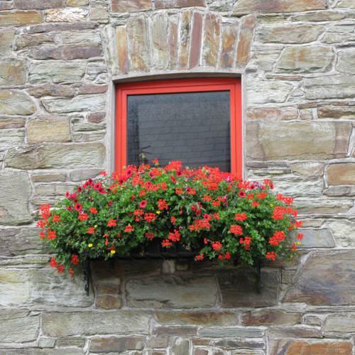 Vườn hoa cực xinh bên cửa sổ | ảnh 13
