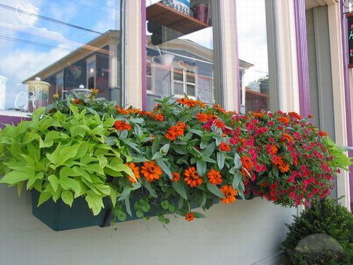 Vườn hoa cực xinh bên cửa sổ | ảnh 14