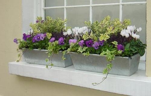 Vườn hoa cực xinh bên cửa sổ | ảnh 17
