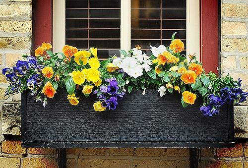 Vườn hoa cực xinh bên cửa sổ | ảnh 2