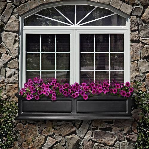 Vườn hoa cực xinh bên cửa sổ | ảnh 4