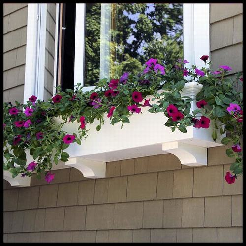 Vườn hoa cực xinh bên cửa sổ | ảnh 5