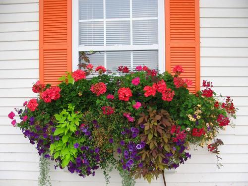 Vườn hoa cực xinh bên cửa sổ | ảnh 7