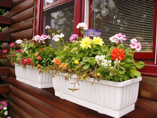 Vườn hoa cực xinh bên cửa sổ | ảnh 8