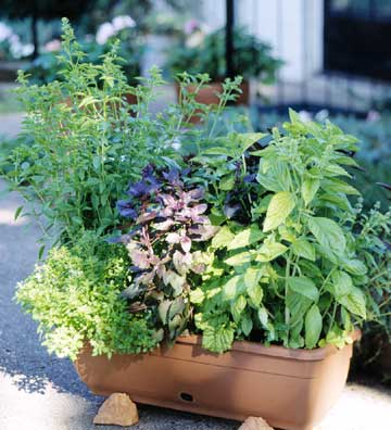 Vườn rau mini đẹp và tiện dụng | ảnh 11