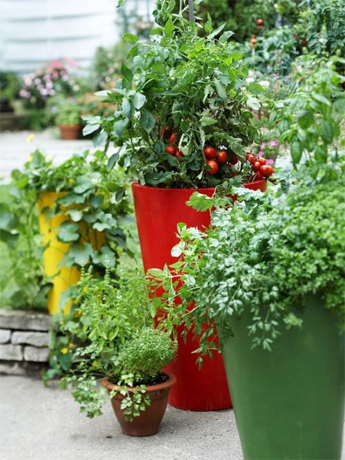 Vườn rau mini đẹp và tiện dụng | ảnh 17