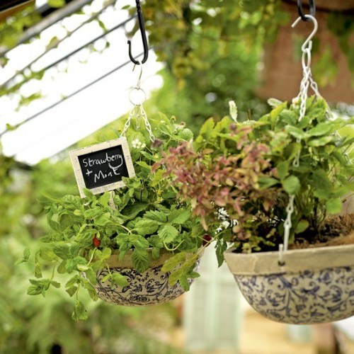 Vườn rau mini đẹp và tiện dụng | ảnh 9
