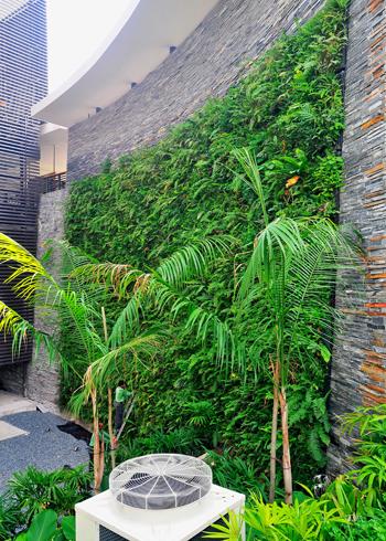 Vườn cây xanh trên tường nhà | ảnh 2