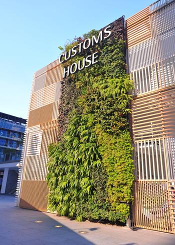 Vườn cây xanh trên tường nhà | ảnh 3
