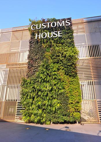 Vườn cây xanh trên tường nhà | ảnh 4