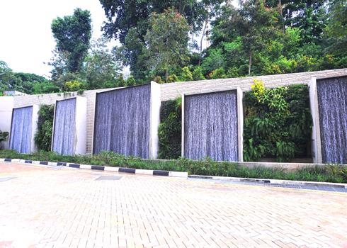 Vườn cây xanh trên tường nhà | ảnh 6
