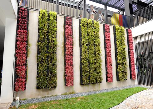 Vườn cây xanh trên tường nhà | ảnh 8