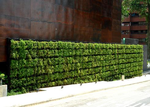 Vườn cây xanh trên tường nhà | ảnh 9