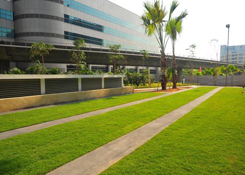 Phủ xanh không gian bãi đỗ xe nhà bạn | ảnh 3