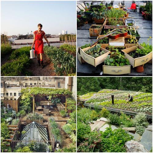 Tạo khu vườn xanh mát trên sân thượng | ảnh 1