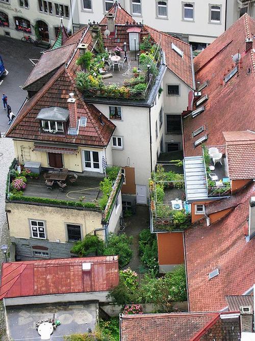 Tạo khu vườn xanh mát trên sân thượng | ảnh 3