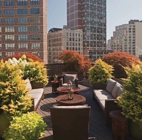 Tạo khu vườn xanh mát trên sân thượng | ảnh 10