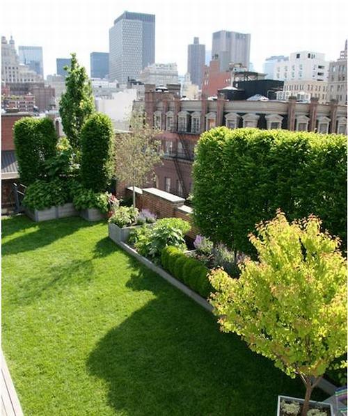 Tạo khu vườn xanh mát trên sân thượng | ảnh 13