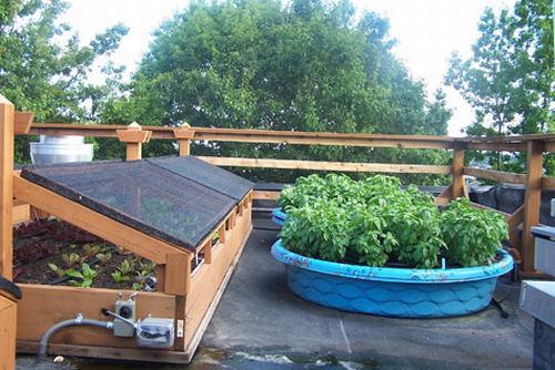 Tạo khu vườn xanh mát trên sân thượng | ảnh 17