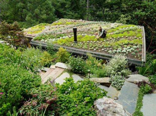 Tạo khu vườn xanh mát trên sân thượng | ảnh 18